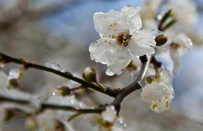 Заморозки ожидаются в Нижегородской области 25 мая