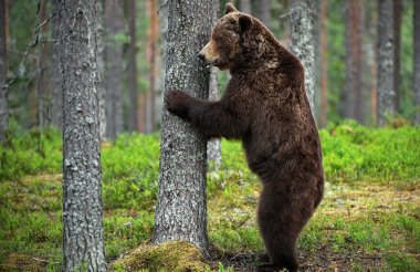 Медведь замечен в старом районе Сарова