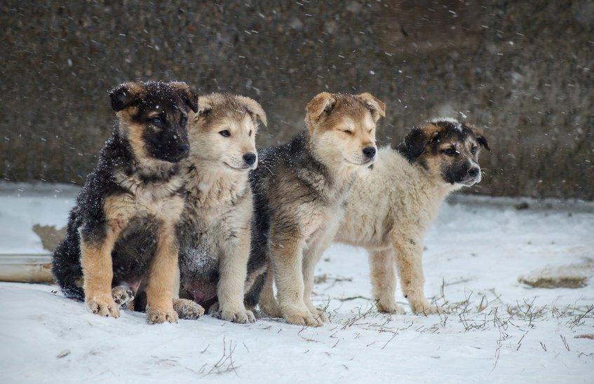 Отлов безнадзорных животных пройдет 6 декабря на проспекте Музрукова